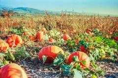 Jesień w szwajcar wsi z analog fotografią i polach - 6 zdjęcia royalty free