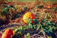 Jesień w szwajcar wsi z analog fotografią i polach - 3 zdjęcie stock