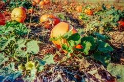 Jesień w szwajcar wsi z analog fotografią i polach - 5 obraz stock