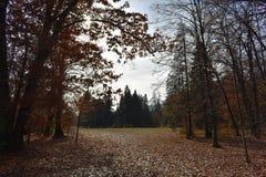 Jesień w włosy nastroju zdjęcie royalty free