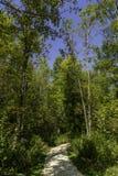jesień wczesny lasowy Russia ślad zdjęcie stock