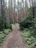 jesień wczesny lasowy Russia ślad Obraz Royalty Free