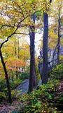 jesień wczesny lasowy Russia ślad Obrazy Stock