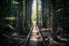 jesień wczesny lasowy Russia ślad Zdjęcia Stock
