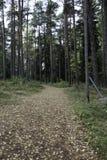 jesień wczesny lasowy Russia ślad Obrazy Royalty Free
