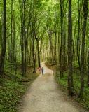 jesień wczesny lasowy Russia ślad Fotografia Stock