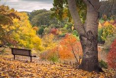 Jesień widok fotografia royalty free