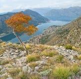 Jesień widok fjords i miasto obrazy royalty free