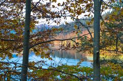 Jesień widok przez cały drzew fotografia royalty free
