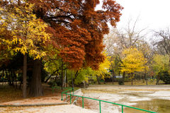 Jesień widok w parku Fotografia Stock