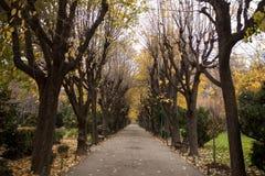 Jesień widok w parku Zdjęcia Royalty Free