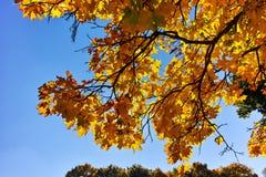 Jesień widok z Żółtymi drzewami w South Park w mieście Sofia zdjęcie royalty free