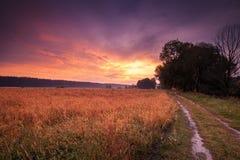 jesień wiejski krajobrazowy Droga gruntowa wzdłuż pola Zdjęcia Royalty Free