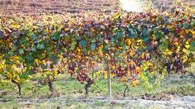 jesień winnica fotografia royalty free