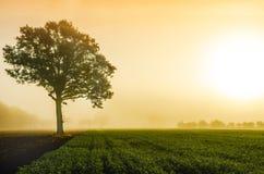 Jesień wschód słońca Zdjęcia Stock