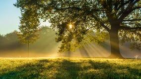Jesień wschód słońca Obrazy Royalty Free