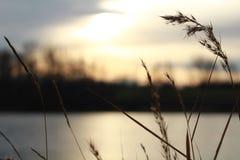 Jesień wschód słońca - riparian rośliny przed wodą zdjęcia royalty free
