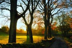 jesień wycollar Obraz Royalty Free