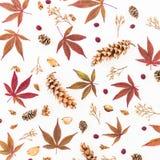 Jesień wzór robić czerwień liście, wysuszeni kwiaty i sosna rożki na białym tle, Mieszkanie nieatutowy, odgórny widok Fotografia Royalty Free