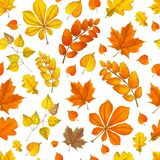 Jesień wzór z spadać liśćmi różni kolory fotografia stock