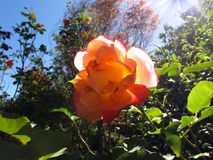 Jesień wzrastał przy słonecznym dniem obraz royalty free