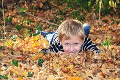 jesień złota Obrazy Stock