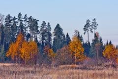 jesień złota Obraz Royalty Free