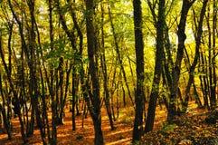 jesień złota Zdjęcia Royalty Free