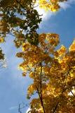 jesień złota Obrazy Royalty Free