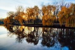 jesień złota Zdjęcia Stock
