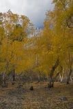 jesień złota parka drzewa Zdjęcia Stock