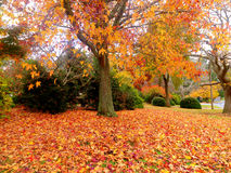 jesień złoty ogrodowy obraz stock