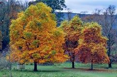 Jesień Złoty wpływ Fotografia Stock