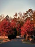 Jesień za bramą Obraz Stock