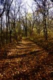 jesień zakrywająca opuszczać ścieżkę Zdjęcia Stock