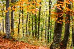 jesień zakrywający spadać lasowy ziemi krajobraz opuszczać kolor żółty Obrazy Royalty Free