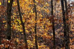 jesień zakrywający spadać lasowy ziemi krajobraz opuszczać kolor żółty Jaskrawi barwioni dębów liście na gałąź Fotografia Royalty Free