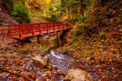 jesień zakrywający spadać lasowy ziemi krajobraz opuszczać kolor żółty Most nad rzeką w ranku f Zdjęcie Royalty Free