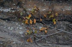 jesień zamkniętej kopii liść przestrzeń zamknięty Fotografia Stock
