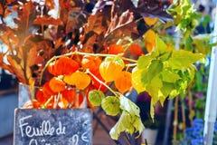 Jesień zasadza pęcherzycy lub chińczyka lampionu fotografia royalty free