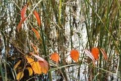 Jesień zasadza tło Zdjęcia Royalty Free