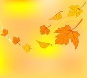 Jesień zawijas Zdjęcia Royalty Free