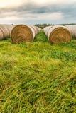 Jesień zbierał wielkie round bele siano w długiej trawie zdjęcie royalty free