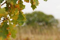 Jesień zbliża się zdjęcie royalty free