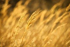 jesień zbliżenia trawy kolor żółty Fotografia Stock