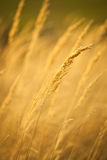 jesień zbliżenia trawy kolor żółty Zdjęcie Stock