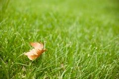 Jesień - zielona trawa z żółtym liściem Zdjęcia Royalty Free