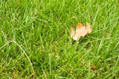 Jesień - zielona trawa z żółtym liściem Fotografia Royalty Free