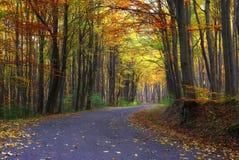 jesień zielonych drogowych słońca drzew pogodowy kolor żółty Zdjęcie Stock