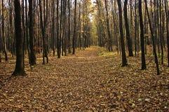 jesień zielonych drogowych słońca drzew pogodowy kolor żółty Obraz Royalty Free